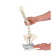 Mini Vertebral Spinal Column-Flexible On Stand