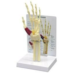 Hand/Wrist Carpal Tunnel Syndrome W/ Key Card