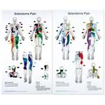 "Sclerotome Pain Charts 22"" X 36"" Set Of 2"