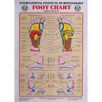 """Int. Institute Of Reflexology Foot Chart 23 X 30"""""""